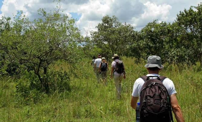 Come and explore the bush on foot!