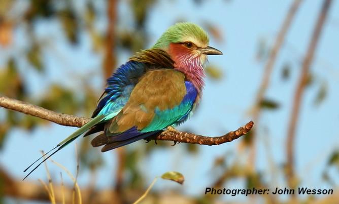 Birds of the Magaliesberg